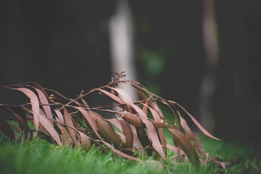 brown dried grass on green grass