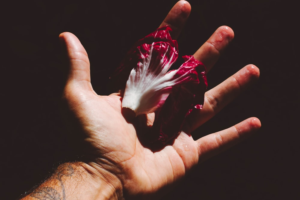 white and red flower on persons palm