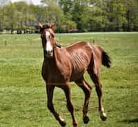 Sapphire Seas horse stories