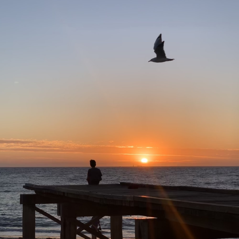 silhouette of bird on wooden dock during sunset