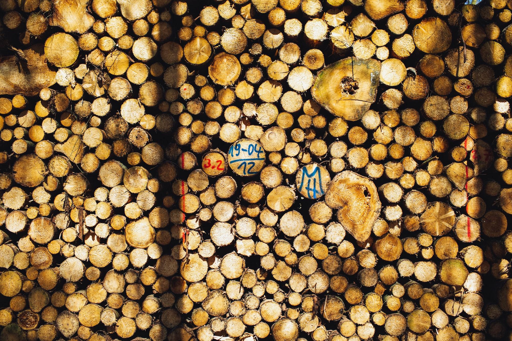 Fresh firewood stack