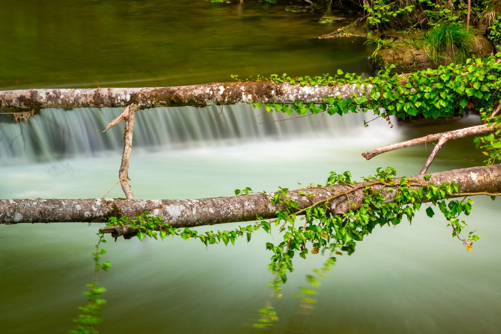 brown tree branch on water
