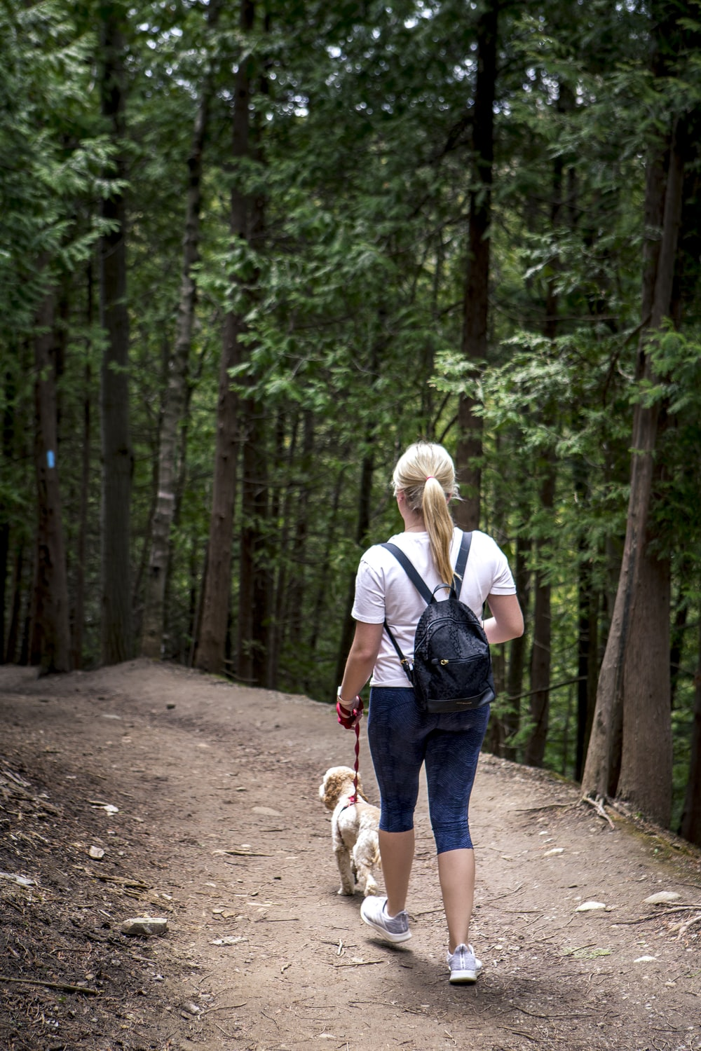 woman in white shirt and blue denim jeans holding brown and white short coated dog