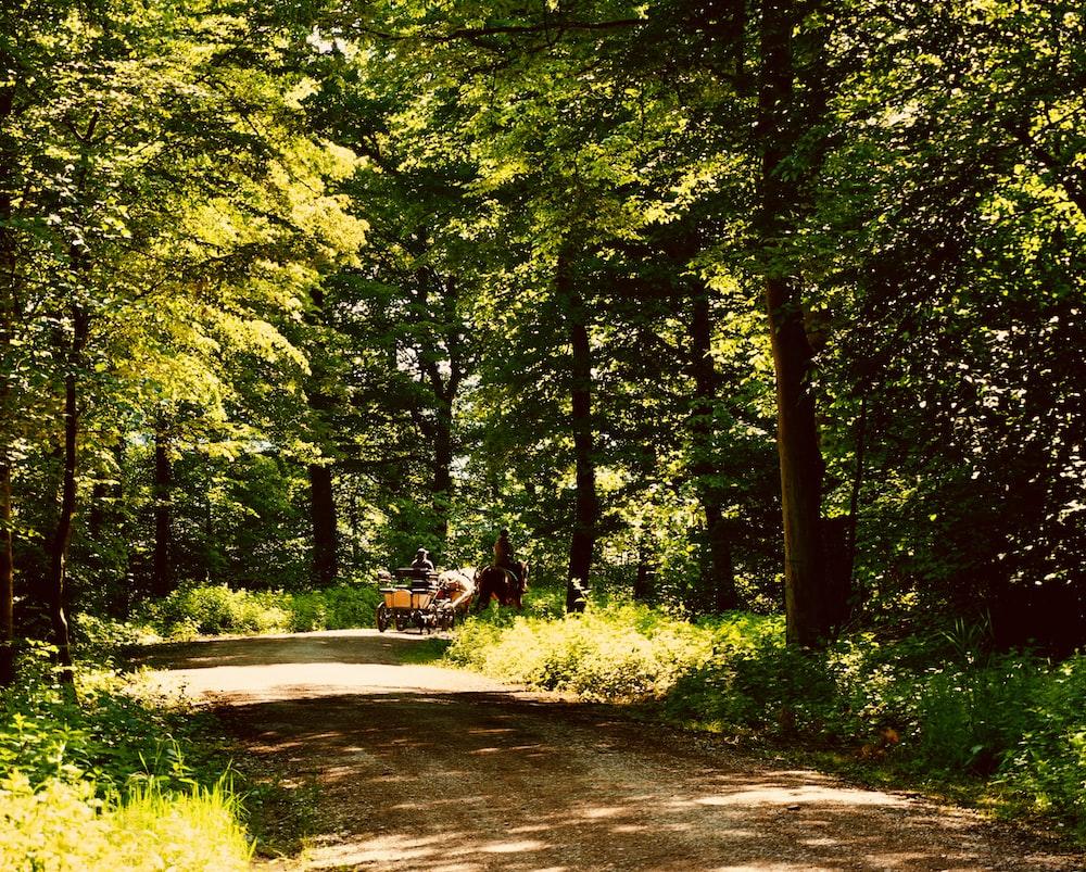 green trees beside gray concrete road