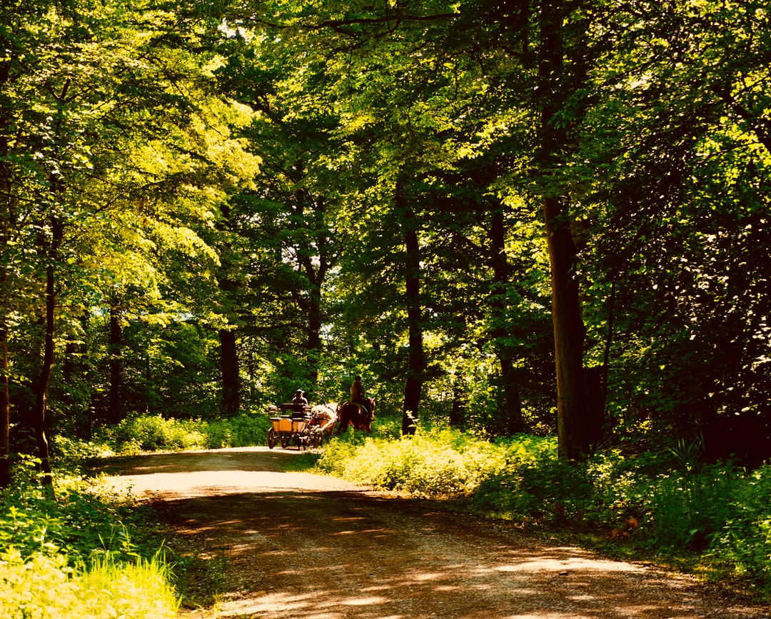Coachman in the Hardwald Forest, Bülach near Zurich (Switzerland)