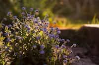𝕱𝖔𝖗𝖌𝖊𝖙                                                 𝖒𝖊                                                𝖓𝖔𝖙 flower stories