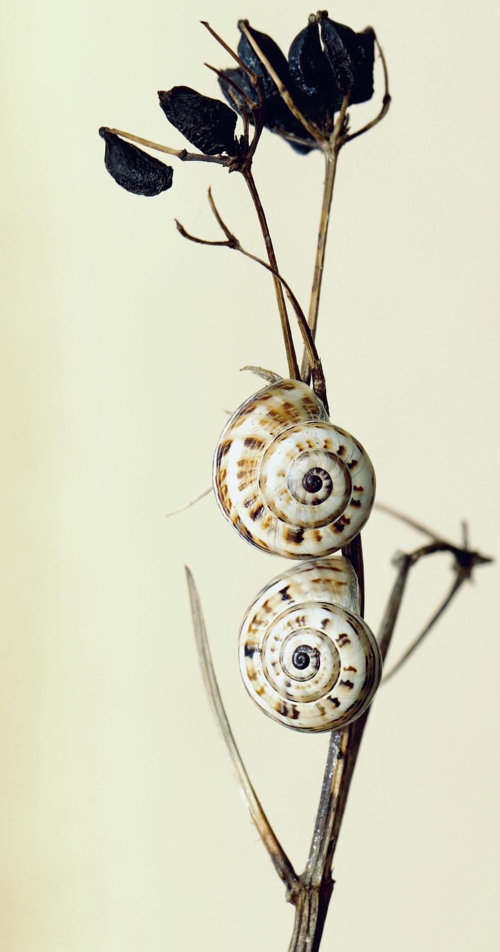 white and black round ornament
