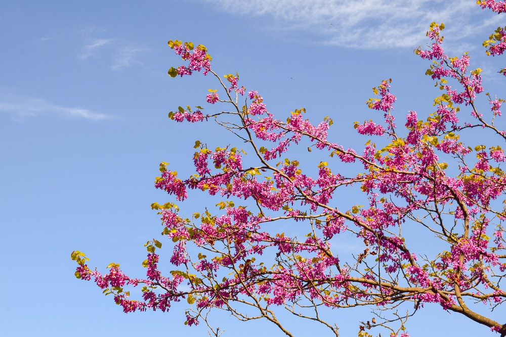 red and yellow flower under blue sky during daytime