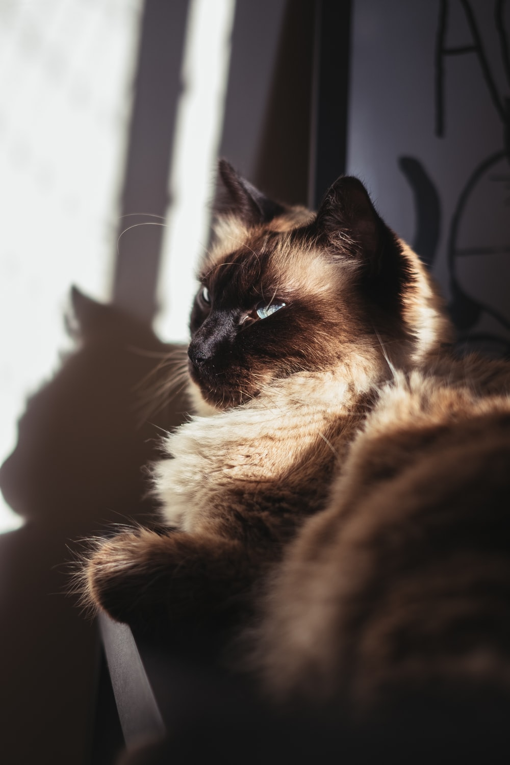 brown and black cat on window