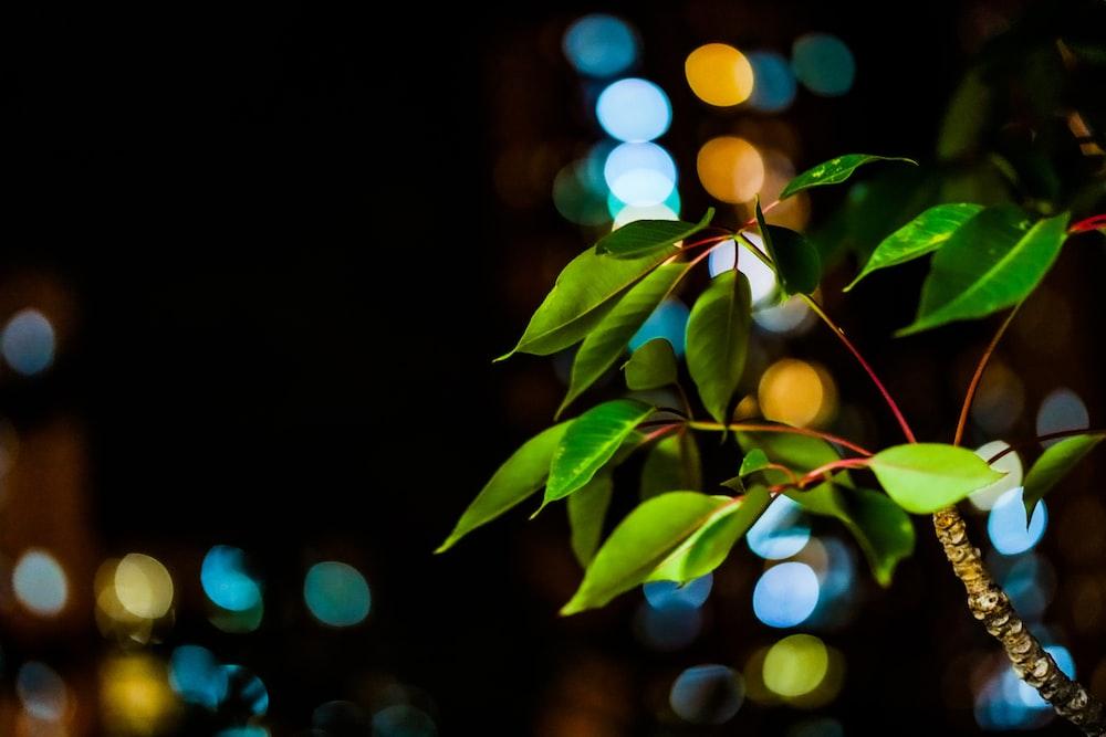 green leaves with orange bokeh lights