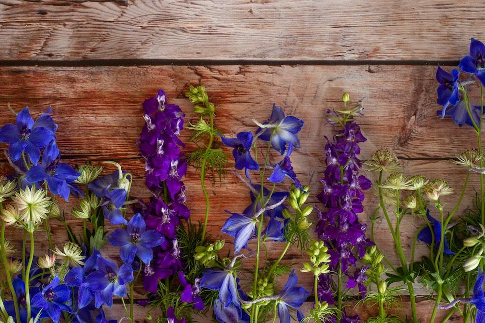 purple flowers on brown wooden plank