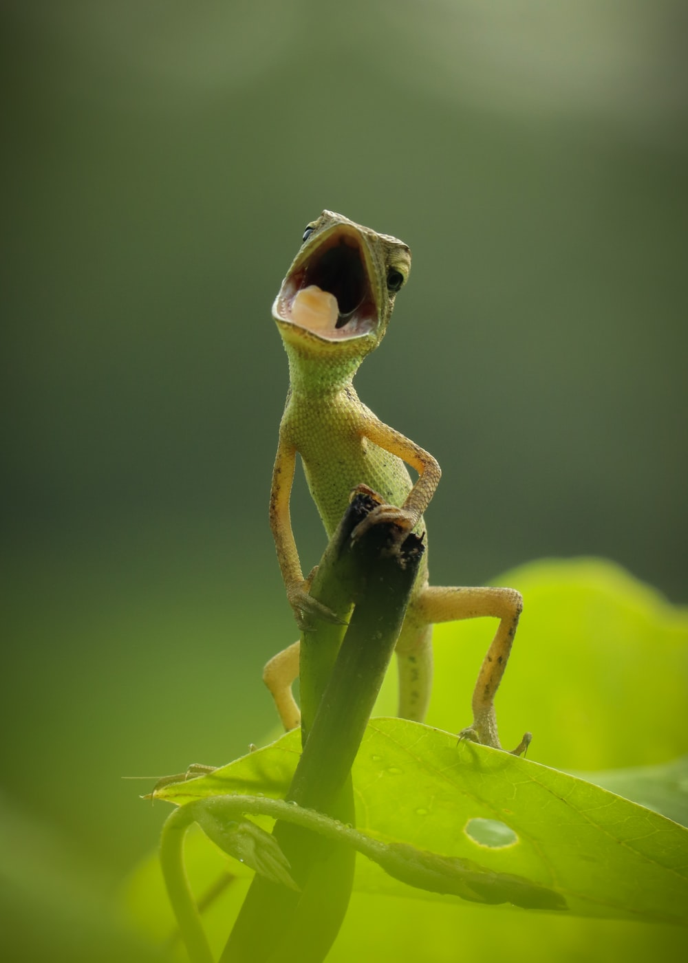 green frog on green leaf
