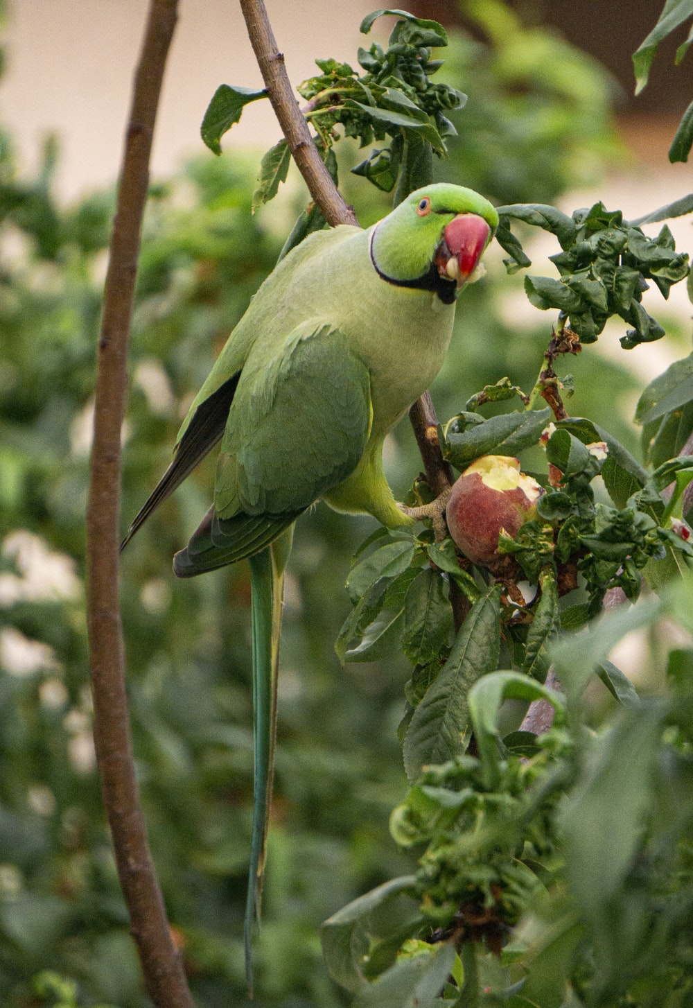 green and yellow bird on tree branch