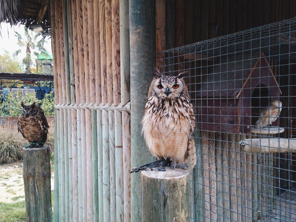 brown bird on brown wooden fence