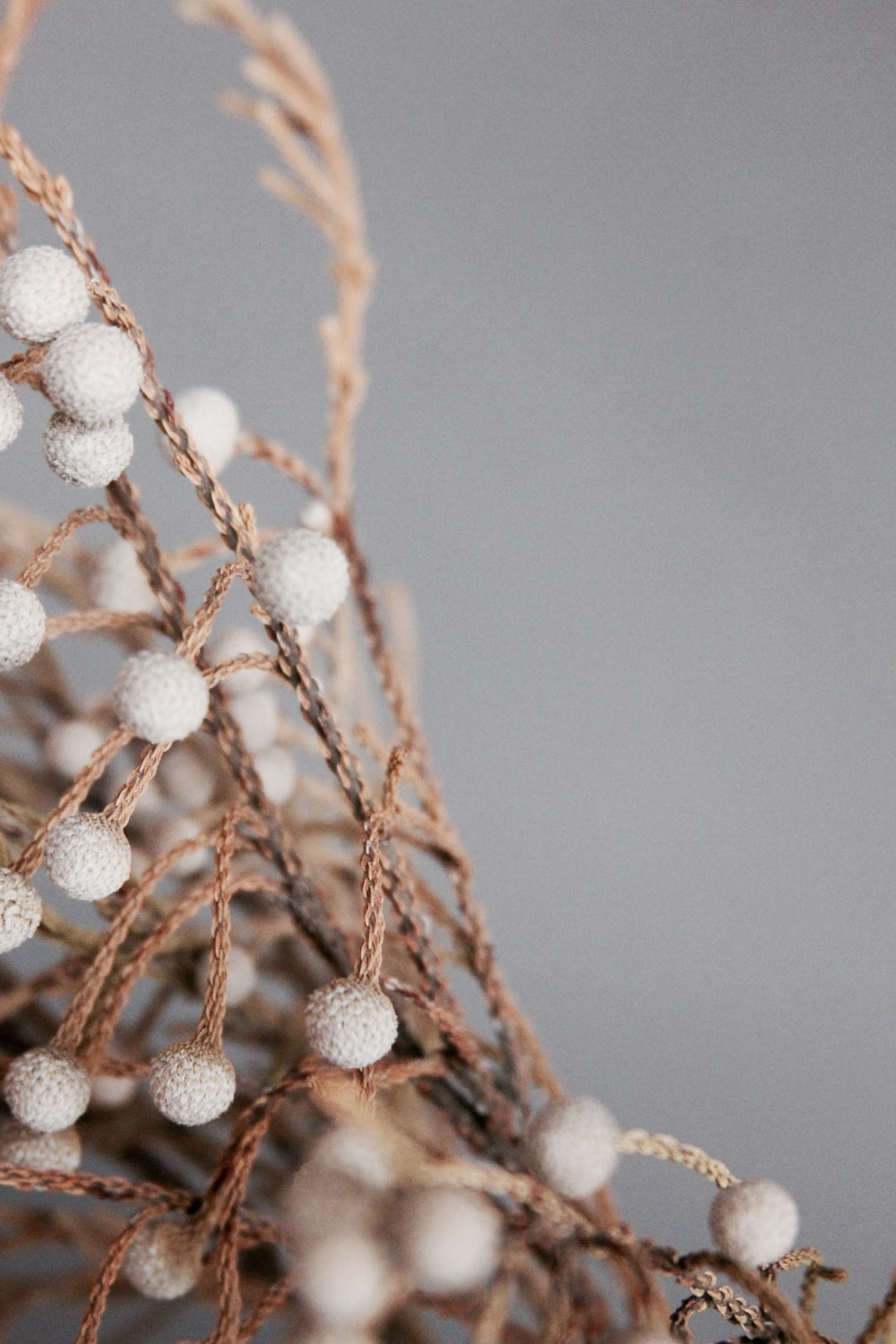 white round flowers on brown tree branch