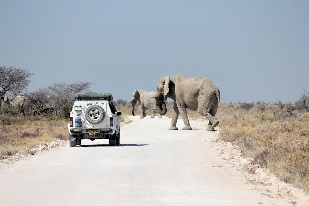 elephant and elephant walking on road during daytime
