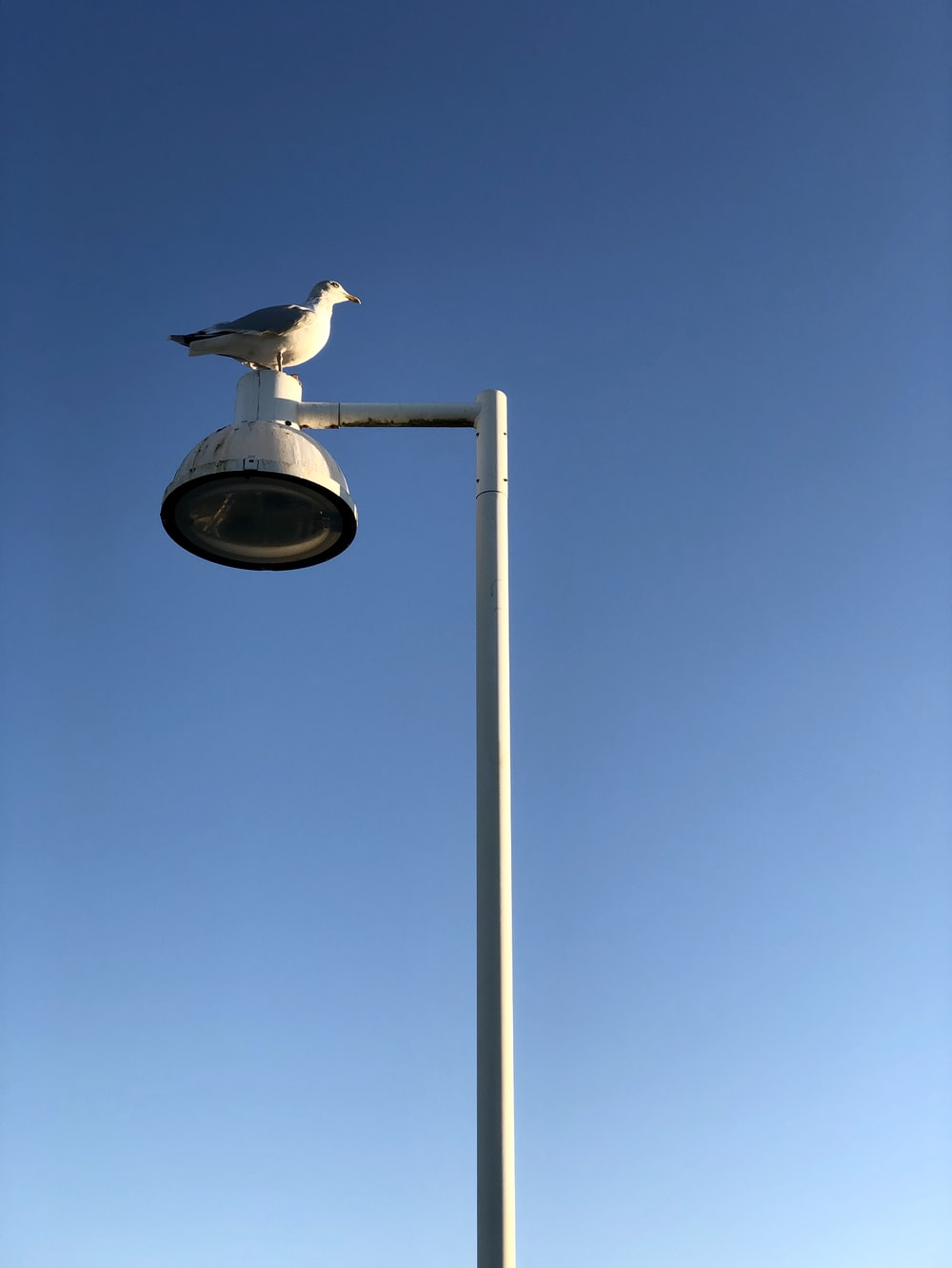 white bird on gray street light during daytime