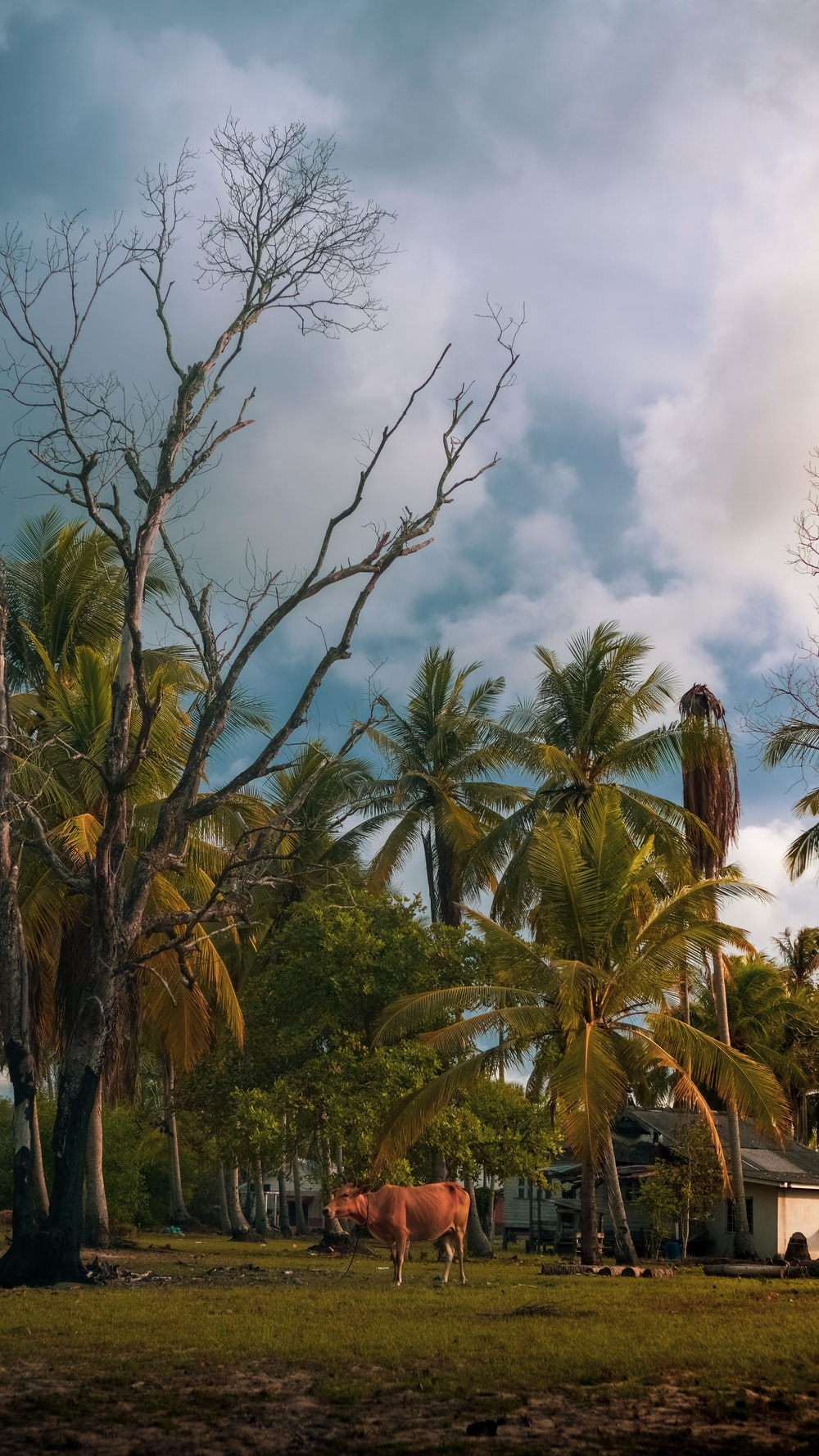 green coconut trees under white clouds during daytime