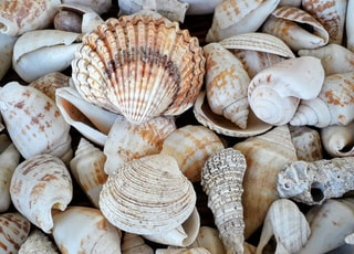 white and brown seashells on brown wooden surface