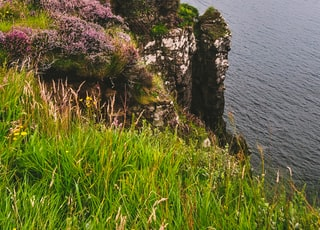 purple flowers on rock formation by the sea during daytime