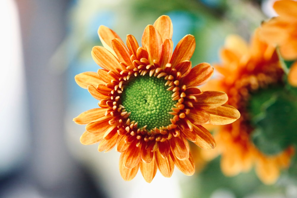 orange and yellow flower in macro lens photography