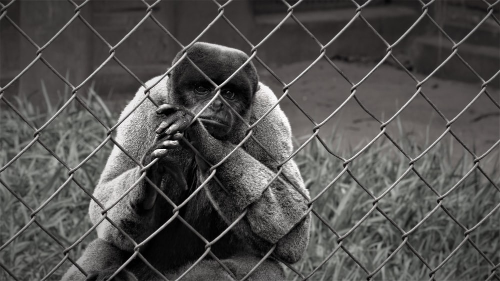 brown monkey on green metal fence