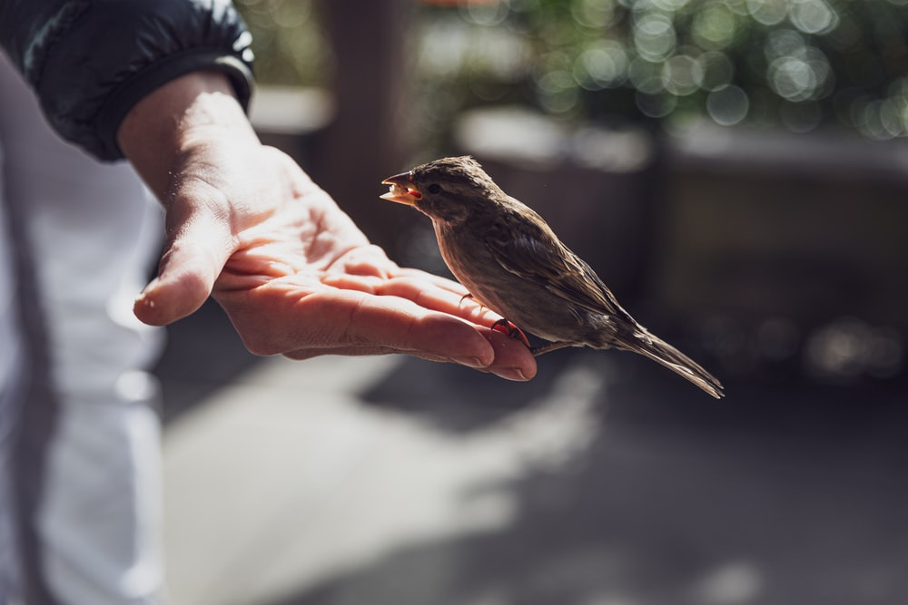 brown bird on persons hand