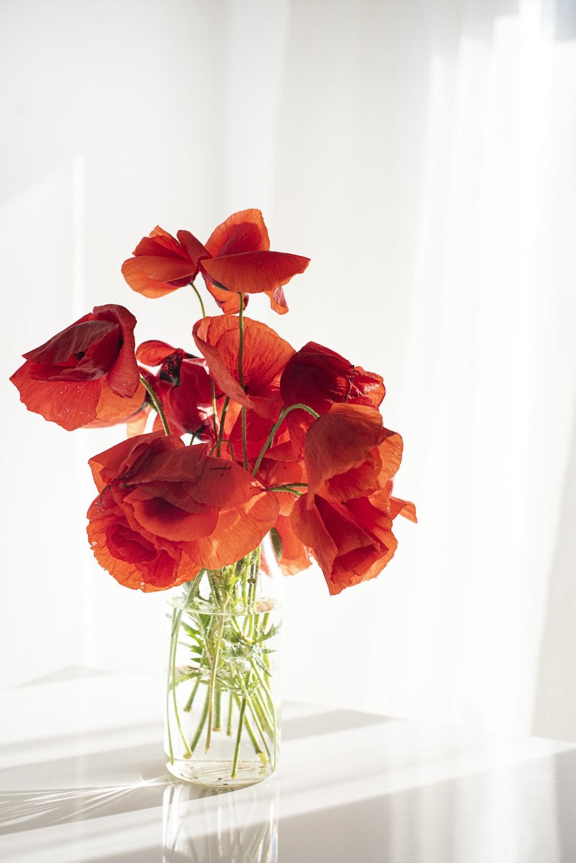 orange flower on white ceramic vase