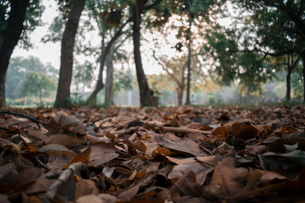 brown leaves on ground during daytime