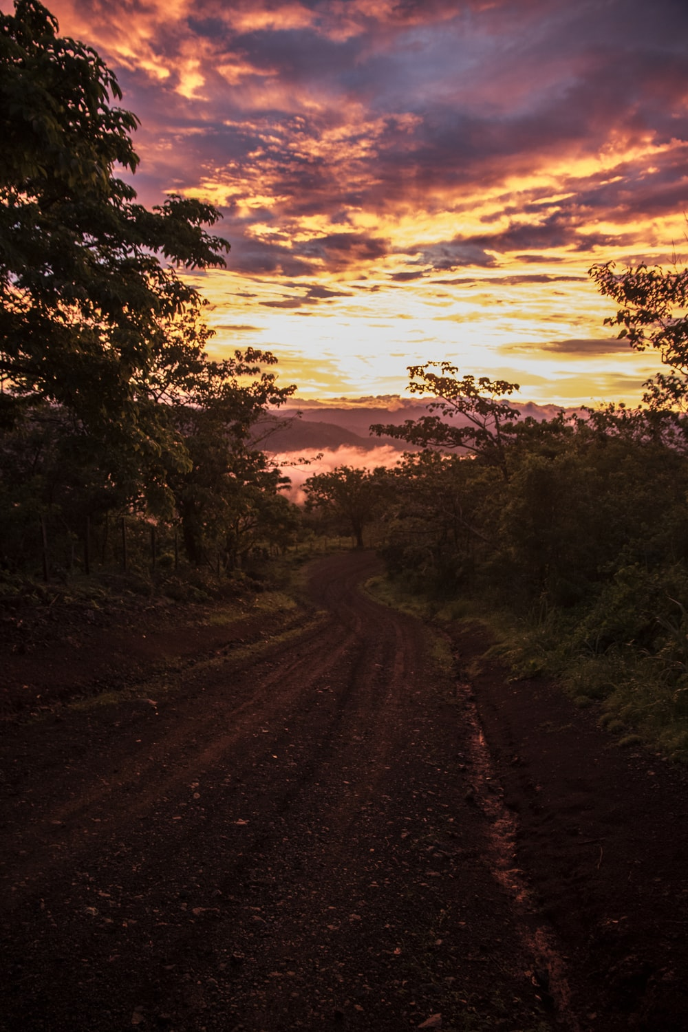 brown dirt road between trees during sunset