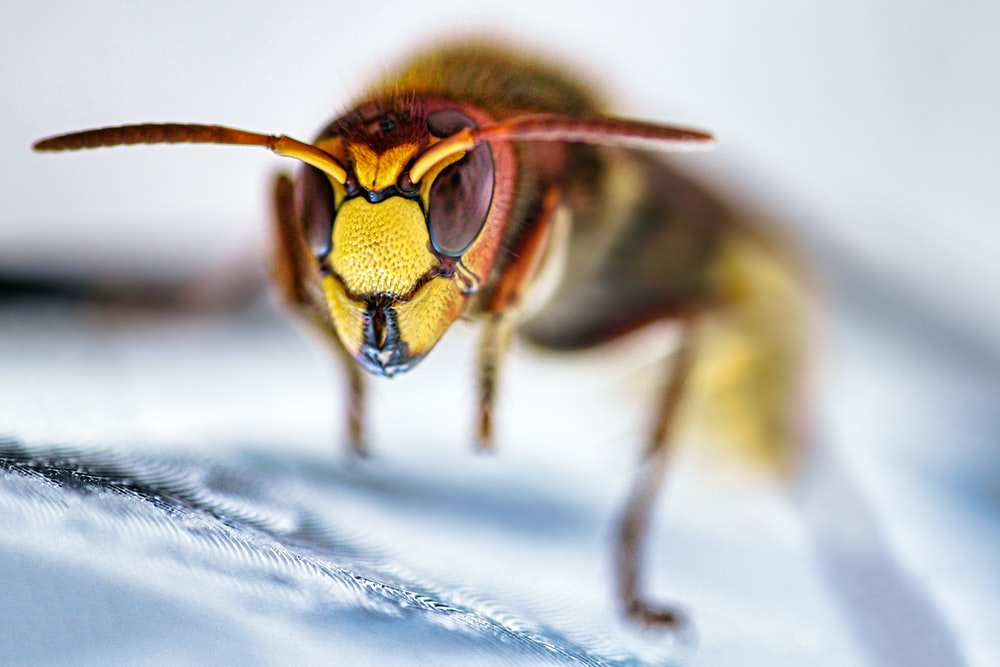 yellow and black bee on white textile
