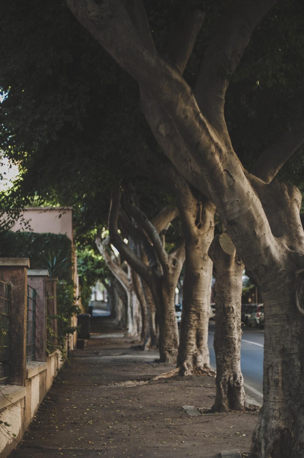 brown tree trunk near road