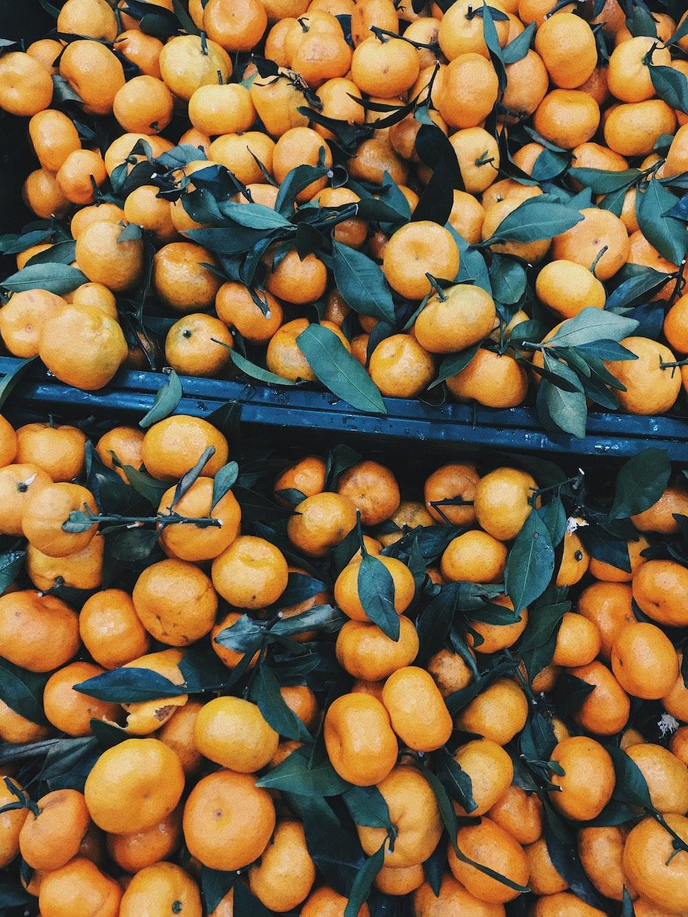orange fruit on black metal rack