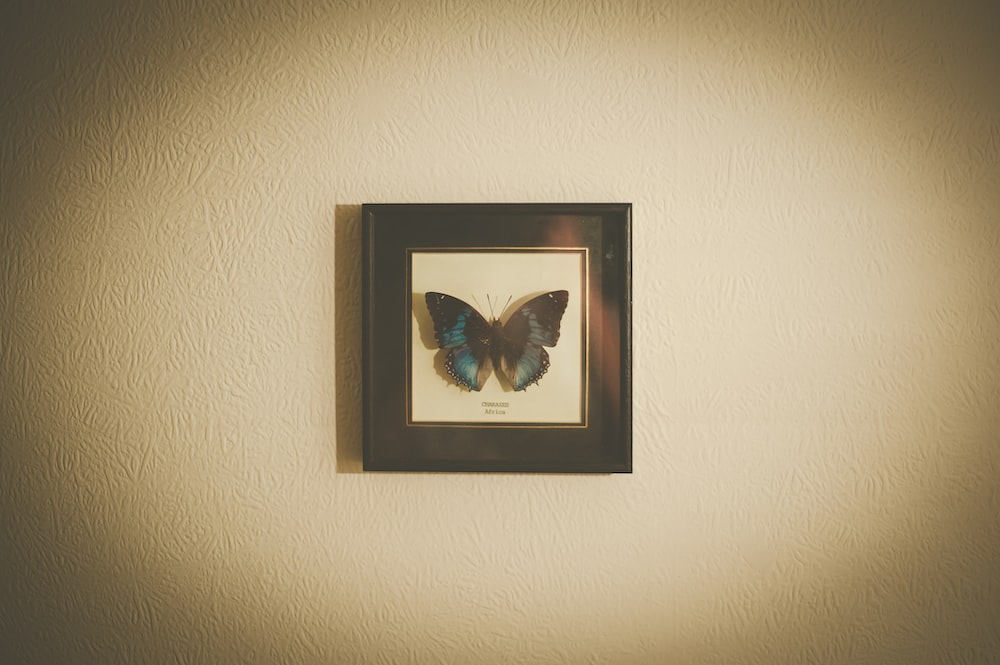 black framed blue and white butterfly painting