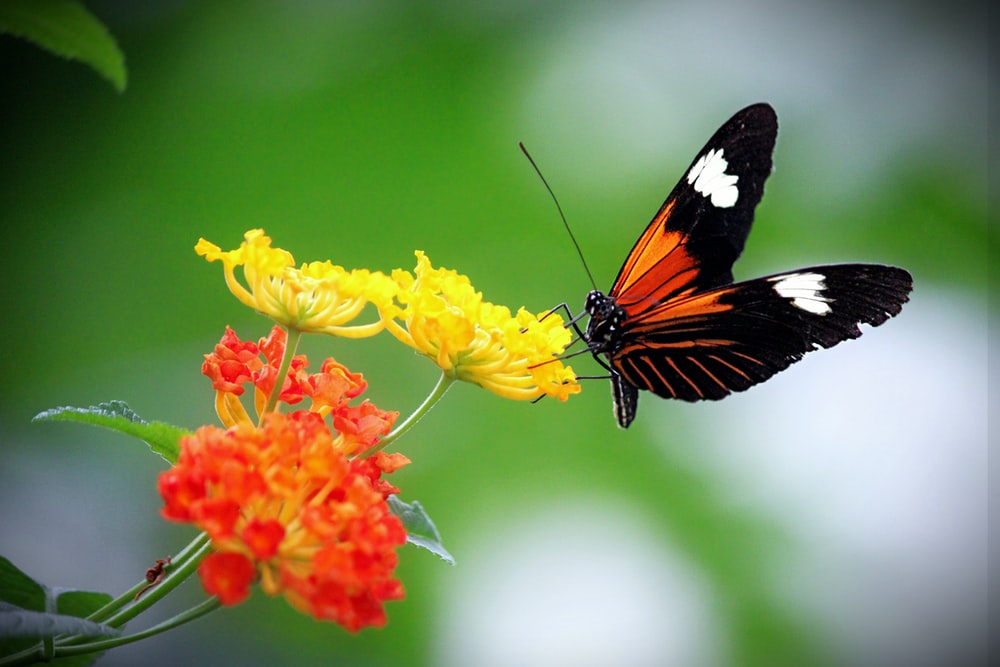 black white and orange butterfly perched on yellow flower in close up photography during daytime