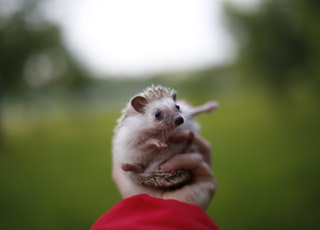 white and brown fur animal on persons hand