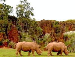 Kampala - Ziwa Rhino Sanctuary