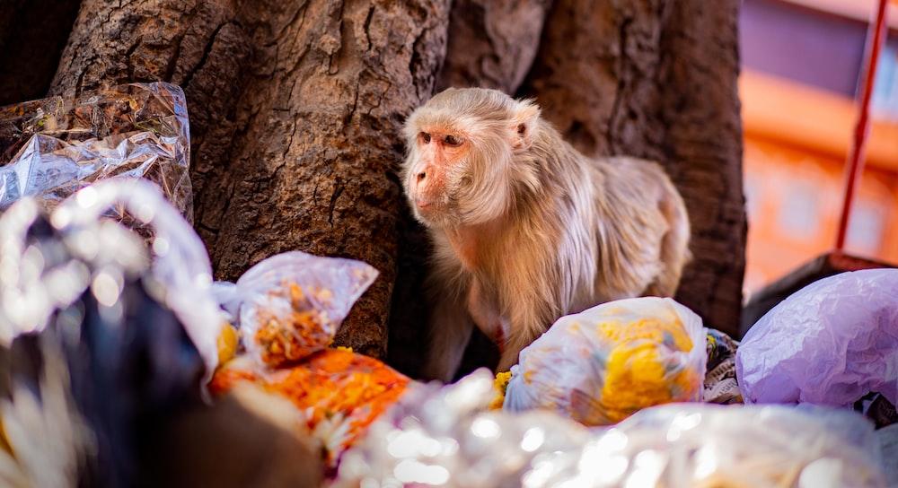brown monkey on tree trunk