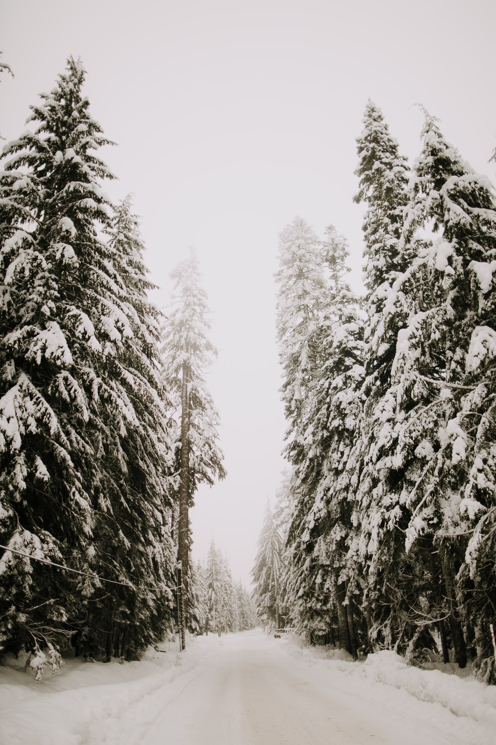 grayscale photo of trees covered with snow