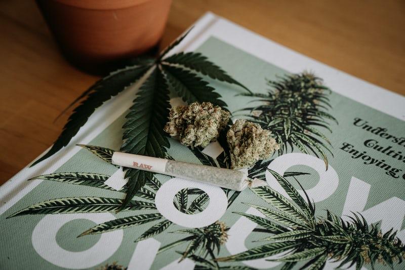 cannabis, frø, indica og sativa