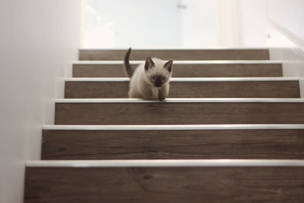 white and brown cat on brown wooden staircase