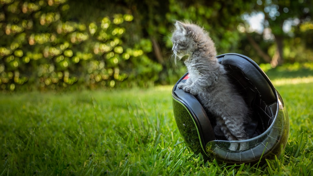 silver tabby cat on black and gray motorcycle seat on green grass field during daytime