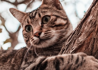 brown tabby cat on brown tree