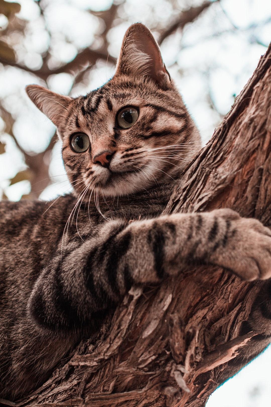 Tabby cat in tree
