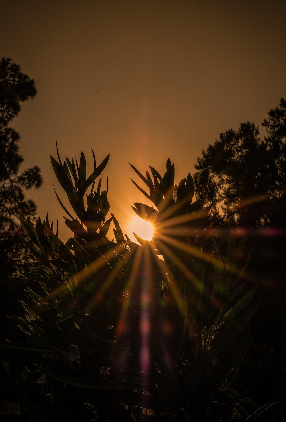 sun rays coming through green trees
