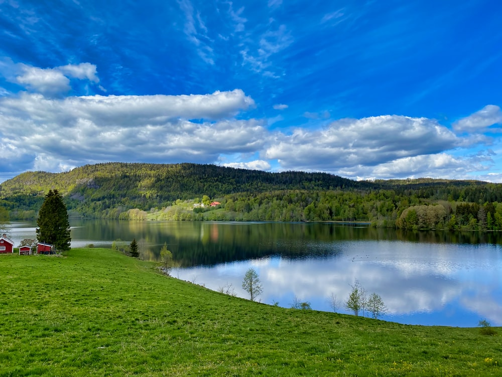 lake surrounded by green grass field and trees under blue sky and white clouds during daytime