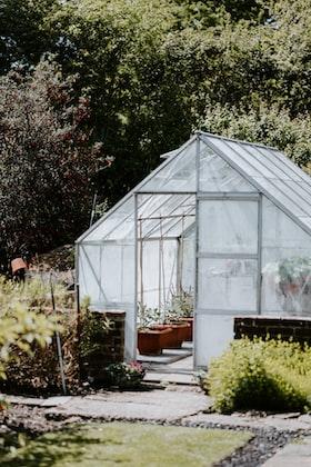 Saiba como começar uma horta orgânica em sua casa