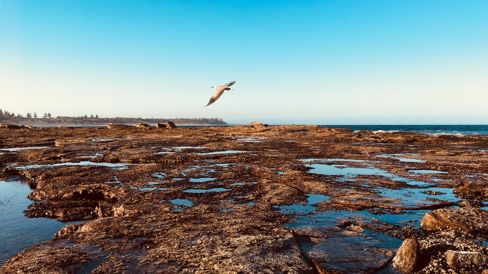 white bird flying over the sea during daytime