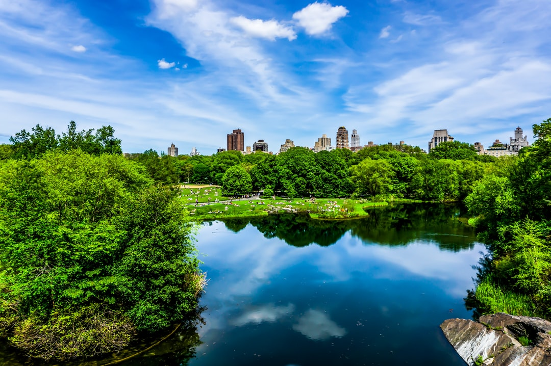 Spring day in Central Park during the COVID-19 lockdown.