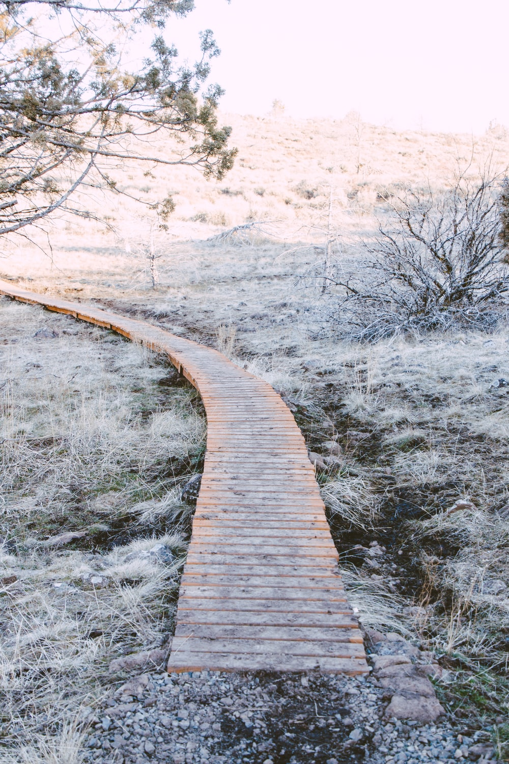 brown wooden pathway in the middle of snow covered ground